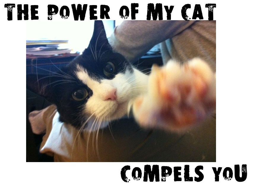 The Power of My Cat Compels You.