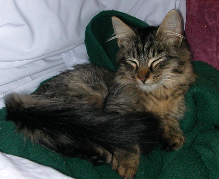 Sparticus le chaton